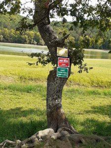 un  arbre trop habillé