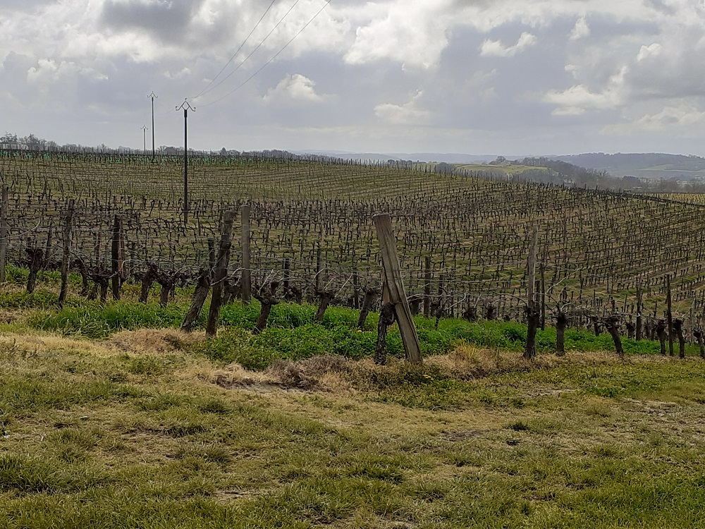 Vignoble bien entretenu= vin de haute tenue